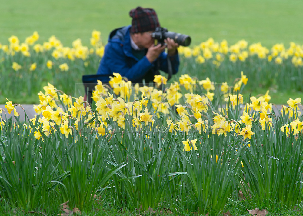 © Licensed to London News Pictures. 21/03/2019. Greenwich, UK. A photographer taking close up pictures of the daffodils. Spring is in the air today in Greenwich park with warmer weather and yellow daffodils.  Photo credit: Grant Falvey/LNP