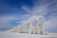 Winter photography on the prairie farmland East of Calgary<br /> <br /> &copy;2018, Sean Phillips<br /> http://www.RiverwoodPhotography.com
