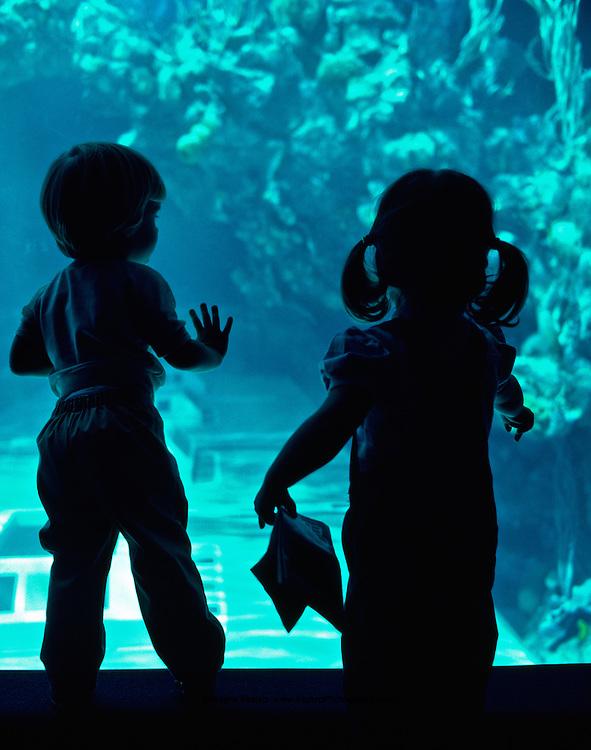 Young visitors spotting a turtle at the Living Seas aquarium, EPCOT, Buena Vista, Florida