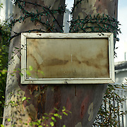 Blank sign posted to a tree in Venice, CA, 2008.