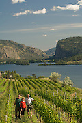 Blue Mountain Winery, Okanagan, British Columbia, Canada