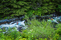 Two kayakers on The middle fork of the Snoqualmie river, Washington, USA.