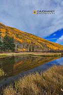 Beaver pond reflects aspen grove near Aspen, Colorado, USA