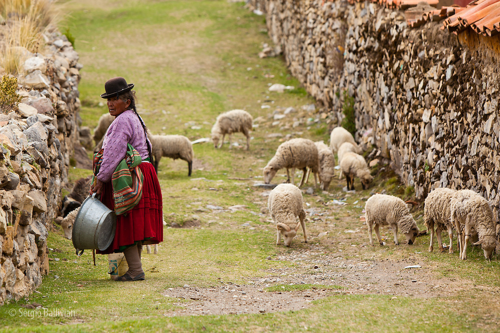 An elderly Aymara woman tends to her scraggly sheep in the village of Sampaya next to Lake Titicaca in Bolivia.