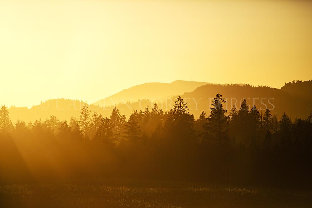 sunset over vineyard on howell mountain. napa valley.