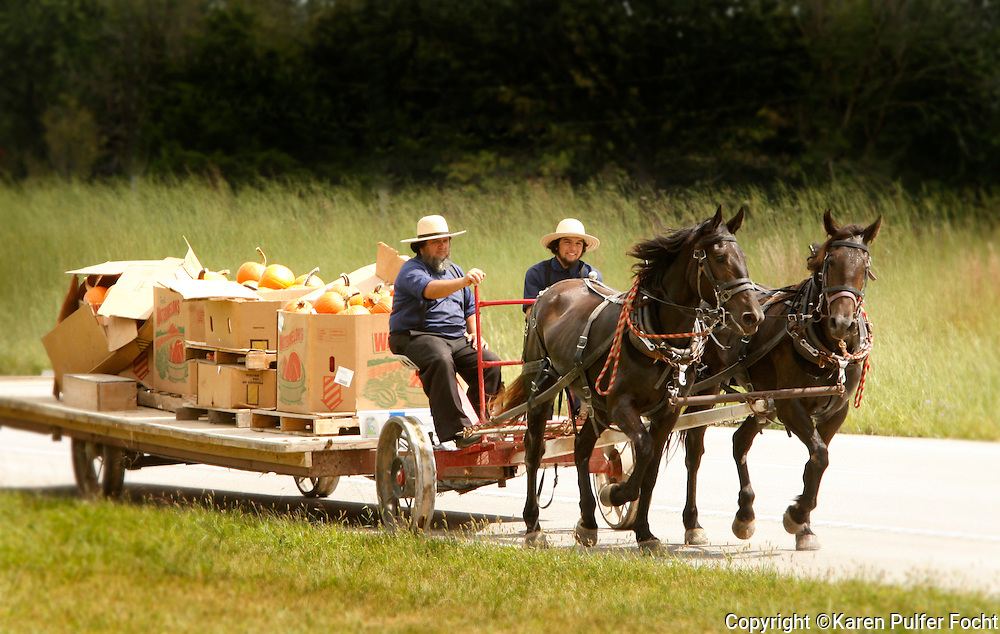 Men driving a horse and buggy take some pumpkins to market in rural Missouri. The Missouri Amish population  grown rapidly in recent years, in part due to Amish migration from other states.  Missouri is home to over 9,000 Amish. Mennonites and Amish are Protestant  and both have settled in Missouri.