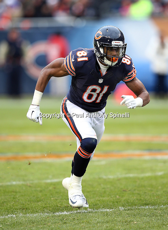 Chicago Bears rookie wide receiver Cameron Meredith (81) goes out for a pass during the NFL week 17 regular season football game against the Detroit Lions on Sunday, Jan. 3, 2016 in Chicago. The Lions won the game 24-20. (©Paul Anthony Spinelli)