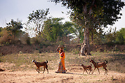 Indian woman with herd of goats at Sawai Madhopur in Rajasthan, Northern India
