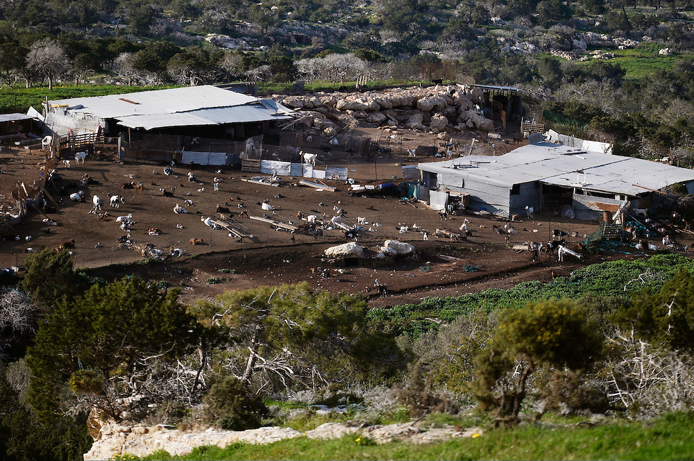 Goat farm on Akamas peninsula, Cyprus
