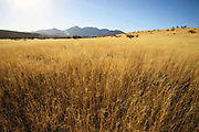 Grasslands along Gardner Canyon Road in the foothills of the Santa Rita Mountains north of Sonoita, Arizona, USA.