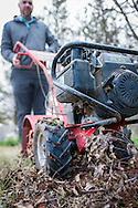 tilling leaves into soil for soil amendment.  Fall garden preparation.