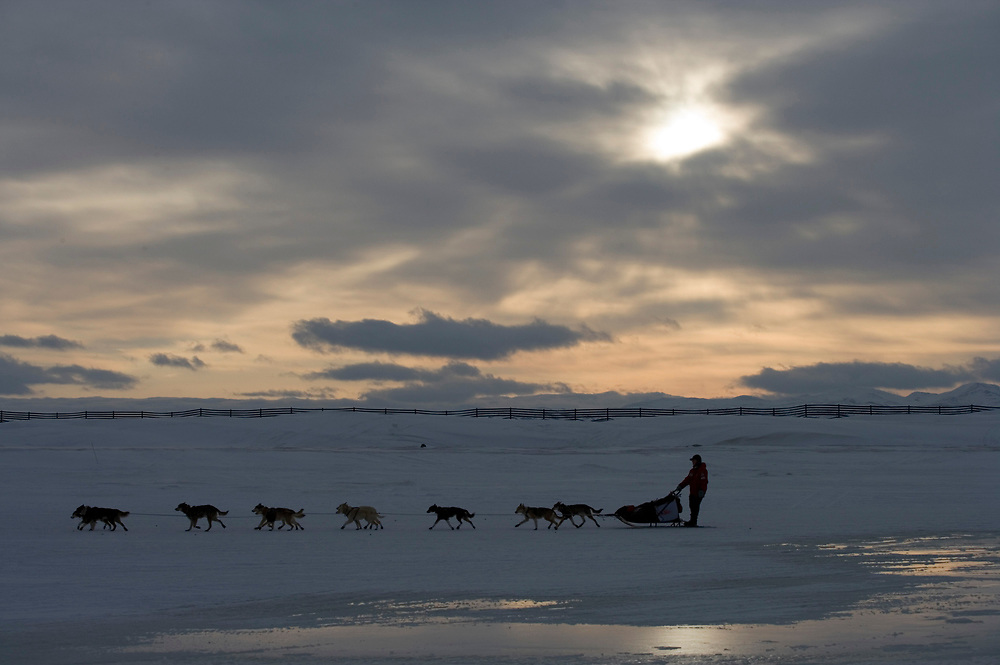 USA, Alaska, Unalakleet, Musher's dog team races along Bering Sea coast during 2005 Iditarod Sled Dog Race on winter morning.
