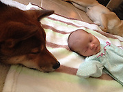 "A baby's best friend! How Zero, the adorably protective Shiba Inu, watches over his owner's two-week-old daughter at all times<br /> <br /> They say dogs are a man's best friend, but one pup has charmed the internet for taking a particular liking to a newborn girl.<br /> Baby River's mother, who goes by the Reddit name Prolificsalo, has captured dozens of moments where Zero, a Shiba Inu, appears very attached to the two-week-old, watching over her as she has her diaper changed and cuddling up to her while she naps.<br /> The resulting images are a testament to the adorable friendships that can spark up between humans and animals, especially when the animal takes his protective role very seriously.<br /> <br /> Prolificsalo wrote: 'We just had a new baby two weeks ago. My dog has decided that she is his and stays as close as he can to her at all times.'<br /> One of the pictures shows River lying on a blanket on the floor, with Zero sitting next to her and resting his nose in her open hand.<br /> <br /> In another, River takes a nap on a couch, and Zero's head can be seen poking out from below as he watches over her intently.<br /> Zero even keeps a watchful eye over River when she has her diaper changed.<br /> <br /> Indeed, in one of the photos, Zero perches on a bed, looking protectively at River as she lies on a table at the other end of the room to have her diaper changed.<br /> Prolificsalo's post has had 1,534 responses since it was shared on Monday, with many commenters writing that their dogs behaved in similar ways with their children.<br /> 'We had a similar situation with our shelty,' wrote one Reddit user. 'Except when my mother went to burp me. . . the shelty would growl at her for ""hurting"" me.'<br /> Another commenter wrote about how her sheep-herding dog would look after her when she was a baby.<br /> <br /> As I got older and could start to crawl and then walk, my dog used to herd me and keep me close,' she wrote. <br /> 'If I got too far, she'd pick me up and take me back to the blanket. She'd never let me get more than five feet away from her, and when"