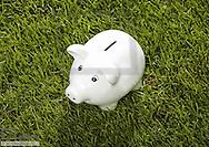 Weisses Sparschwein steht in gruener Wiese