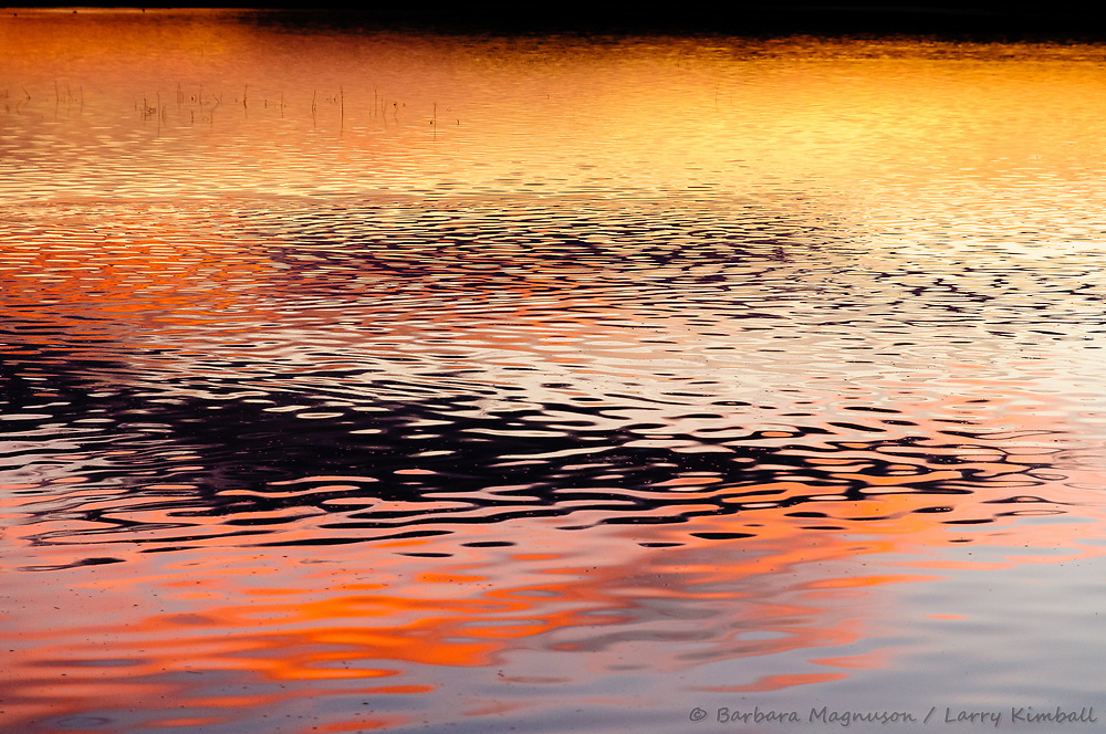 Sunset light and cloud reflections; Bosque del Apache NWR., NM