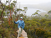Explore nature boardwalks along Lake Lilla, in Cradle Mountain - Lake Saint Clair National Park, Tasmania, Australia. Mostly native to Australia where they dominate the tree flora, Eucalyptus is a diverse genus of flowering trees (and a few shrubs) in the myrtle family, Myrtaceae. Many are known as gum trees because of copious sap exuded from any break in the bark. The Tasmanian Wilderness was honored as a UNESCO World Heritage Site in 1982, expanded in 1989. For licensing options, please inquire.