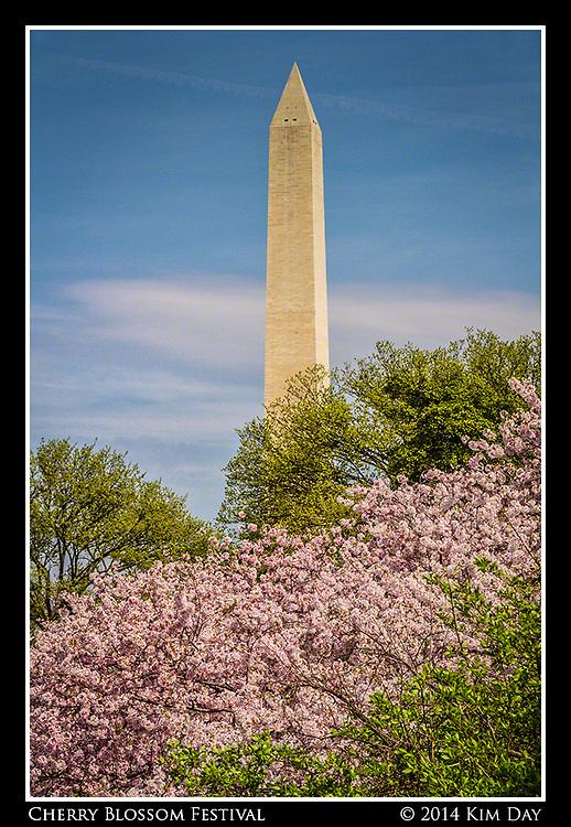 Washington National Monument<br /> Cherry Blossom Festival - Washington DC<br /> April 13, 2014