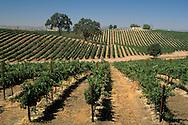 Vineyards, Paso Robles, San Luis Obispo County, California