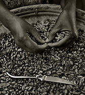Batey Vasca, Dominican Republic- The hands of a woman shucks small beans. A ten-pound bag of beans and a gallon of oil delivered by some aid agencies is sometimes the only food a family receives between harvest when workers are not paid. The food will provide one meal a day for a family of four for one month.  (Photo by Robert Falcetti)