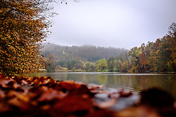 THEMENBILD - Wie im Indian Summer herbstlich bunt gefärbte Blätter auf den Bäumen des Waldes rund um den Thalersee in Thal bei Graz am 26. Oktober 2016 // THEMES PICTURE - Indian Summer style coloured leafes on the trees around Lake Thalersee near Graz, Austria on 26 October 2016. EXPA Pictures © 2016, PhotoCredit: EXPA/ Erwin Scheriau