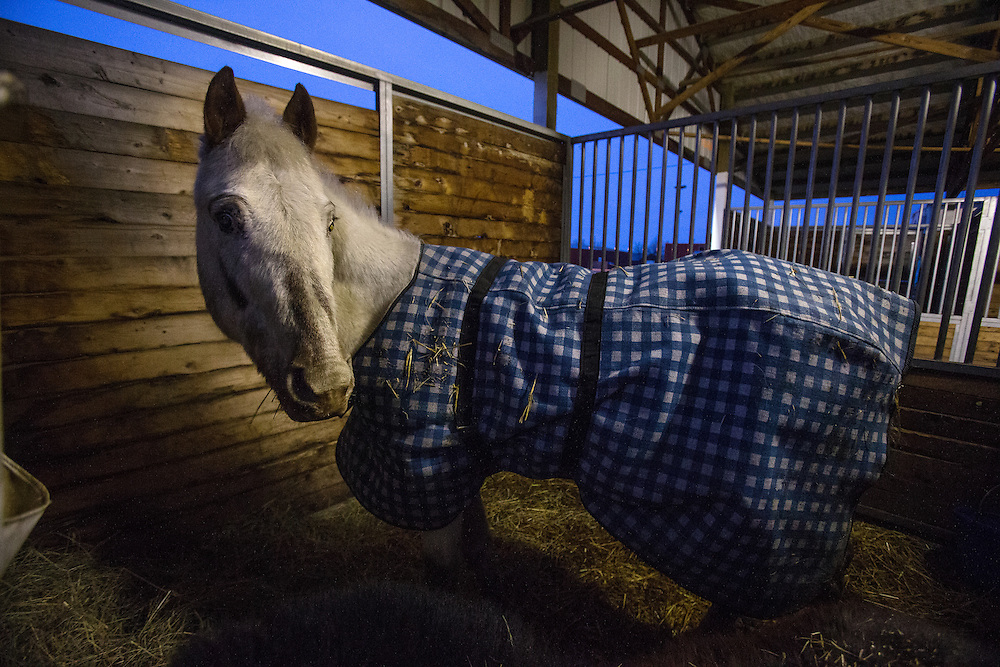 A blind horse is one of the many animals being boarded at the Kootenai County Fairgrounds after being taken from a Athol-area residence by police Friday night.