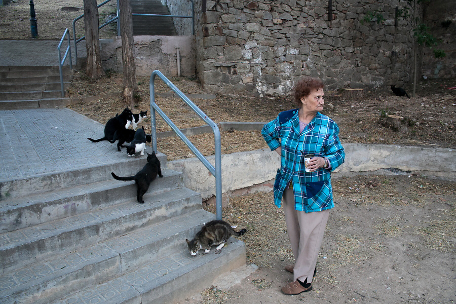 /EN/ Night falls and Marta comes to feed Vaquita and other wild cats from the mountain. /ES/ Al atardecer, Marta sube al barrio para alimentar a Vaquita y los demás gatos salvajes de la montaña.