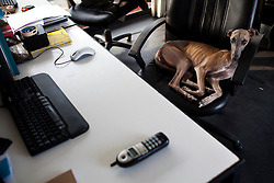 Lapiz, the office dog, inside the offices of Productora in Mexico City.