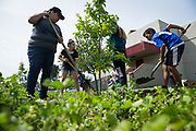 Patricia Romero, left, and Miguel Rivera, 10, of San Jose, plant trees on Earth Day in partnership with Our City Forest at Sinnott Elementary School in Milpitas, California, on April 22, 2017. (Stan Olszewski/SOSKIphoto)