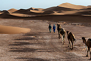 Camel (dromedary) caravan with nomads in the desert.