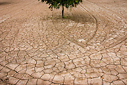 The dried cracked earth of a desert pecan grove.<br /> Anthony, New Mexico