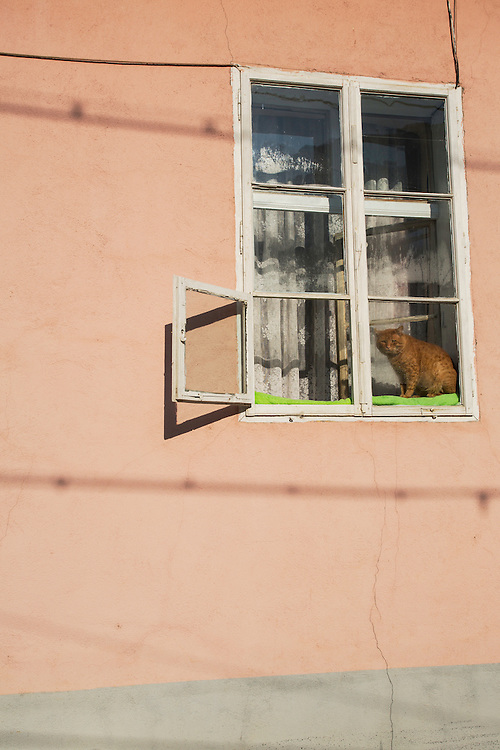 Domestic cat sitting in a window frame in the sun in a house in the city of Baile Herculane, Caras Severin, Romania.
