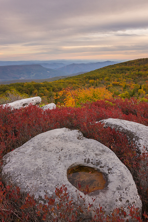 Autumnal firey blueberry bushes surround the boulders of Bear Rocks in the Dolly Sods Wilderness of West Virginia as it contrasts against yellows and blues of the mountains below.