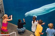 351021-1045G.Huey ~ Copyright: George H.H. Huey ~ Visitors watching the live Beluga whales at the Mystic Aquarium.  Mystic, Connecticut.