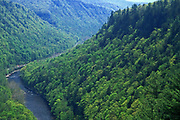 Pine Creek Gorge, summer forest, Pine Creek, central PA