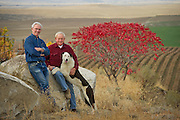 Red Willow Vineyard, central Washington