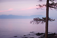 Pine tree silhouette over misty pink sunset sky with mountains in the background. Strait of Georgia, Salish Sea, Pacific Ocean in Nanaimo, Vancouver Island, BC, Canada.