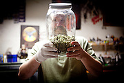 Mario Abad holds a jar of medicinal marijuana at Canny Bus, a nonprofit pot delivery service, January 11, 2011..CREDIT: Max Whittaker for The Wall Street Journal.Bay Area - Cannybus