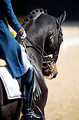 Aachen Dressage Days