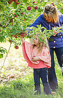 Lauryn and her mother Brynne Salmon pick apples at Stonybrook Farm in Gilford on Thursday afternoon.  (Karen Bobotas/for the Laconia Daily Sun)
