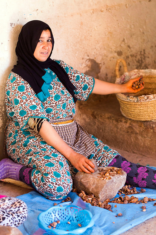 AOULOUZ, MOROCCO May 24th 2016 - Farmers shell argan nuts by hand to make traditional Moroccan argan oil at a farm in Agouni n Fad village near Aoulouz, Taliouine & Taroudant Province, Souss Massa Draa region of Southern Morocco.