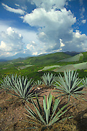 Mitla, Mexico, October 2005. A mescal factory where the Agave plant is distilled into a potent drink. Mexico is a colorful country with remnants of many ancient civilisations, mixed cultures, and two oceans. Photo by Frits Meyst/Adventure4ever.com