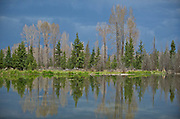 Beaver Pond - Grand Teton National Park