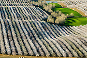 These almond trees depend on bee pollination.  Without pollination by honey bees, as many as two thirds of edible plants and roughly a third of the average U.S. diet would simply disappear.
