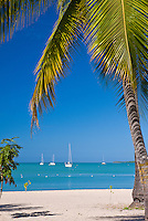 Sail boat resting on Boquerón bay's calm waters; palm in the foreground