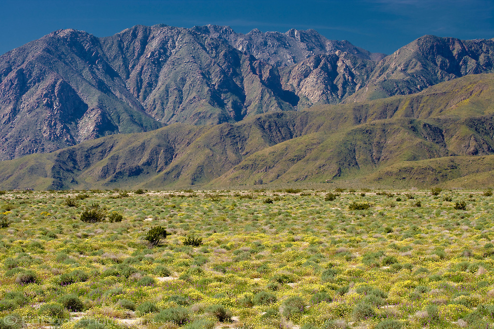 Springtime in the Anza-Borrego Desert and the Santa Inez Mountains, California
