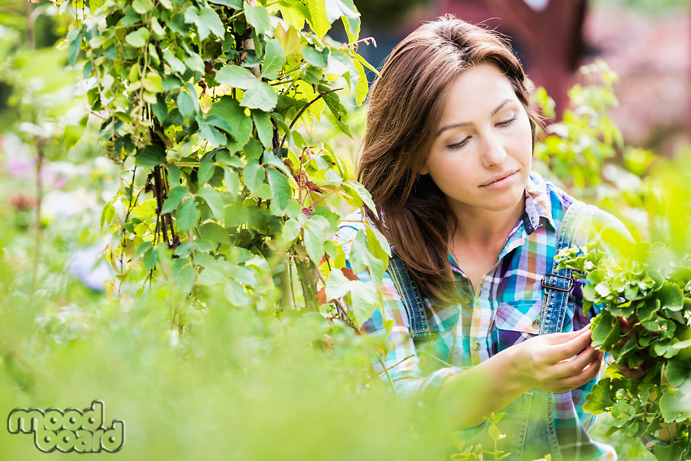 Portrait of beautiful gardener examining plants in shop
