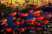 23/Septiembre/2014 Cabo Verde. Boa Vista<br /> Buceo con el centro Scuba Caribe de Boa Vista.<br /> <br /> &copy;&nbsp;JOAN COSTA