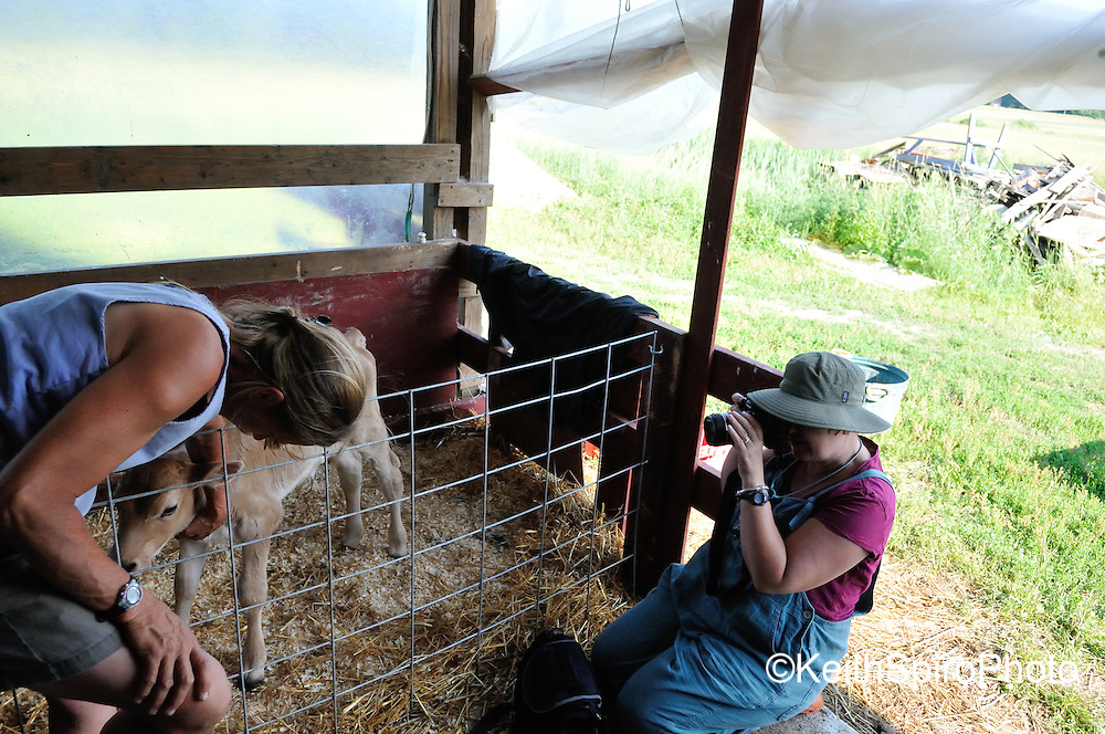 Maine Artists, CSA farmers partnered. KeithSpiroPhoto, day in photos at Goranson Farm, documenting for KVAA and the Harlow Gallery