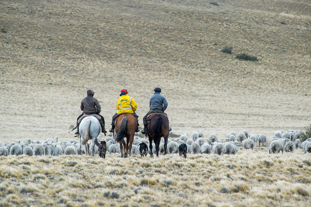 Farmers Herding with Horses, Argentina