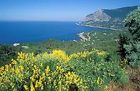 Ukraine. Crimée, Riviera sur la côte sud. Mer Noire // South coast - Ukrainian riviera on the black sea - Crimea - Ukraine